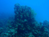 Abu Adila dive, Red Sea, Sudan