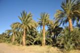 Fertile strip along the East Bank of the Nile between El Kurru and Karima