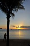 Silhouette of a palm at sunset, Mauritius