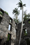 Palm tree growing inside the old arsenal