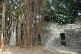 Ruins at Balaclava, Mauritius
