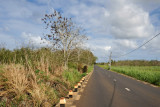 The small road from Balaclava leading to the Port Louis-Grand Baie Road