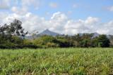 Sugar Cane Fields, Balaclava