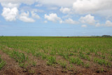 Flat agricultural land between Balaclava and Arsenal