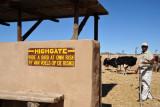 Highgate - Ride a bird at own risk