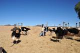 Riding an ostrich - what a bizarre feeling