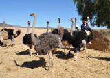 Highgate Ostrich Show Farm, Oudtshoorn