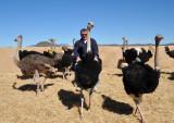Ostrich ride, Highgate Show Farm, Oudtshoorn