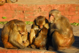 Monkies at the Monkey Temple, Kathmandu