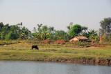 Pastoral scene outside Sauraha, Central Terai