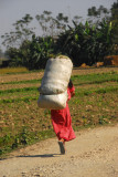 Woman carrying a large load, Central Terai