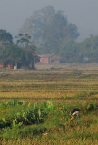Rice paddies, Central Terai