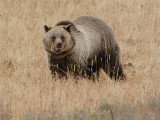 Bear 320