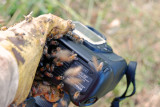 Africanized bees on camera