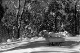 Big Snow - February 2010