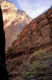 Canyon Light Zion