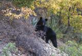 Ursus Chisos