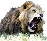lionmir 72.jpg