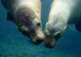 galapagos_underwater__2008