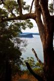 Lion Island with redgum tree