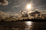 Sydney Harbour with storm clouds and gull