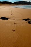Footprints at Avalon Beach
