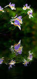 Orchid in flood