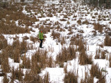 Julie out on a frozen swamp