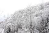 Snow-covered hillside