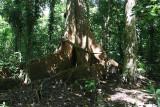 Sandbox Tree