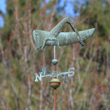 Grasshopper - S. Weare, N.H.
