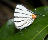 Yucatan Butterflies