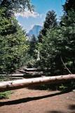 Camping in Yosemite National Park