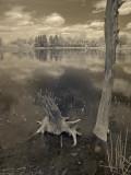 Loon Lake Stump 0076.jpg