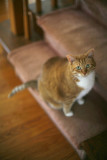 Fat Cat II Canon 5D.jpg