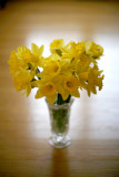 Daffodils  f/1.2 58mm Rokkor on 5D Canon