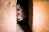 bunker bat count
