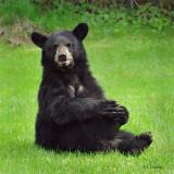 Household Bears