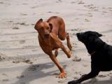 Avila Dog Beach 4-21