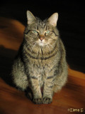 Ayrton, my cat!