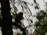 and a blurry owl on this tree limb