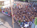 10-Parthasarathy Utsavam.Day 07.Ther.Divya Prabanda Goshti in full view.JPG