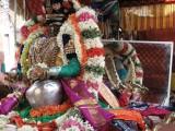 03-Parthasarathy Utsavam.Day 08.Vennai Thaazhi Kannan.jpg