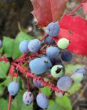 Autumnal Berries