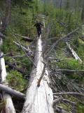 walking along fallen trees can at times be the easiest way...