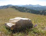 Petrified log Gallatin ridge