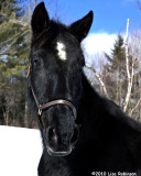 Lisas black horse.
