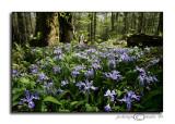 Noah Bud Ogle Nature Trail VIApril 26