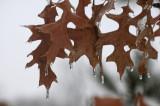 Omaha Winter 2009032.JPG