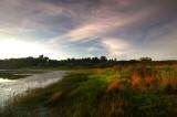 Lakeshore Grasses Under Cirro Cumulus Skies